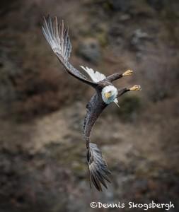5283 Bald Eagle, Homer, Alaska