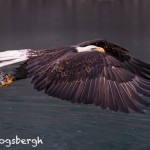 5284 Bald Eagle, Homer, Alaska