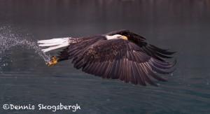 5284 Bald Eagle, Homer, Alaska