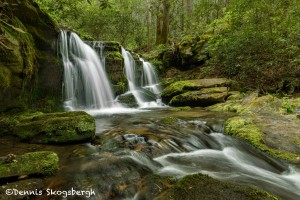 5298 Spring, Rhododendron Creek Waterfall, Great Smoky Mountains National Park, TN