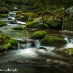 5303 Cascade, Spring, Great Smoky Mountains National Park, TN