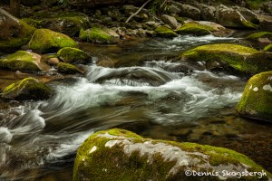 5305 Cascade, Spring, Great Smoky Mountains National Park, TN