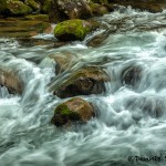 5307 Cascade, Spring, Great Smoky Mountains National Park, TN