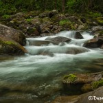 5308 Cascade, Spring, Great Smoky Mountains National Park, TN