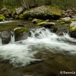 5310 Cascade, Sam's Creek, Spring, Great Smoky Mountains National Park, TN