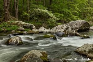 5316 Cascade, Spring, Great Smoky Mountains National Park, TN