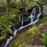 5329 Waterfall, Spring, Great Smoky Mountains National Park, TN