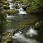 5331 Cascade, Spring, Great Smoky Mountains National Park, TN