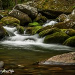 5332 Cascade, Spring, Great Smoky Mountains National Park, TN