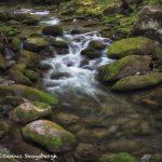 5336 Cascade, Spring, Great Smoky Mountains National Park, TN