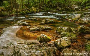 5337 Cascade, Spring, Great Smoky Mountains National Park, TN