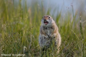 5383 Prairie Dog, Grand Teton National Park, WY
