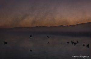 5390 Foggy Sunrise, National Elk Refuge, Jackson, WY