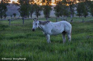 5395 Sunrise, Mormon Row Horse Ranch, Grand Teton National Park, WY
