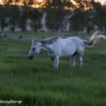 5396 Sunrise, Morman Row Horse Ranch, Grand Teton National Park, WY