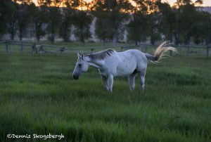 5396 Sunrise, Morman Row Horse Ranch, Grand Teton National Park, WY