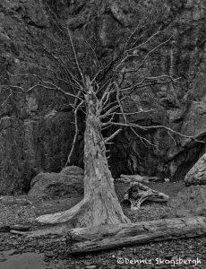 5507 Drift Wood, Ruby Beach, Olympic National Park, WA