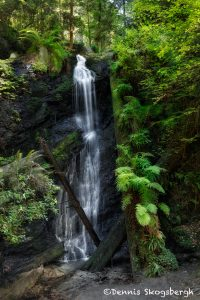 5566 Fern Canyon Waterfall, Russian Gulch State Park, Mendocino, California