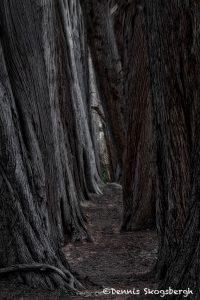 5576 Cypress Trees, Sea Ranch, California