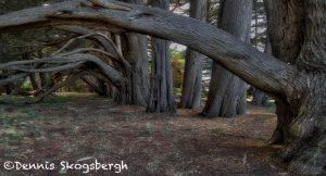 5579 Cypress Trees, Sea Ranch, California