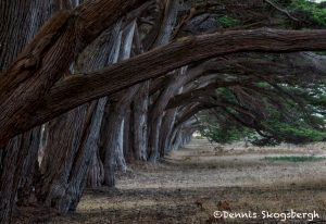 5582 Cypress Tree Grove, Point Reyes, California