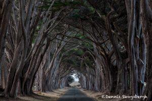 5583 Cypress Tree Tunnel, Point Reyes, California