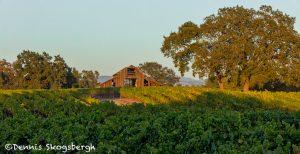 5585 Sunset, Vineyard, Santa Rosa, California