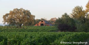 5586 Sunset, Vineyard, Santa Rosa, California