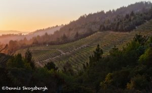 5587 Sunrise, Santa Rosa Vineyard, California