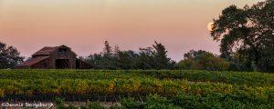5588 Sunset, Vineyard, Santa Rosa, California