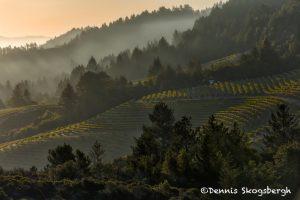 5603 Sunrise, Vineyard, Santa Rosa, California