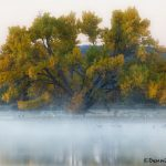 5726 Foggy Sunrise, Bosque del Apache, New Mexico