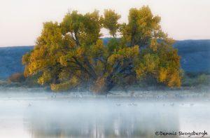 5726 Foggy Sunrise, Bosque del Apache, New Mexico