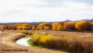 5753 November Colors, Bosque del Apache NWR, New Mexico