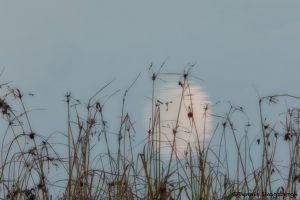 5759 Moon Reflection, Bosque del Apache NWR, New Mexico.