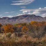 5764 November Colors, Bosque del Apache NWR, New Mexico