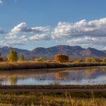 5765 November Colors, Bosque del Apache NWR, New Mexico