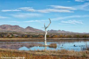 5775 November Colors, Bosque del Apache NWR, New Mexico