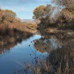 5776 November Colors, Bosque del Apache NWR, New Mexico