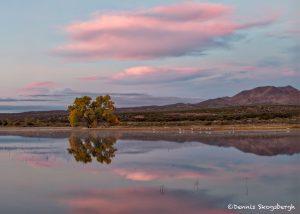 5779 Sunrise, Bosque del Apache, NWR, New Mexico