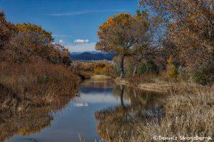 5786 November Colors, Bosque del Apache NWR, New Mexico