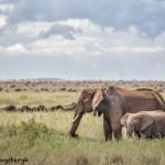 5859 African Elephants, Serengeti, Tanzania