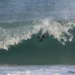5997 Rockhopper Penguin, Saunders Island, Falklands