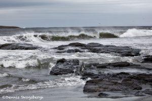 6030 Sea Lion Beach, Falklands