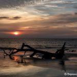 6269 Sunrise, Jeckyll Island, Georgia