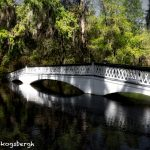 6298 Magnolia Plantation and Gardens, Charleston, SC