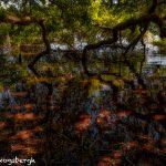 6299 Magnolia Plantation and Gardens, Charleston, SC