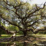 6319 Magnolia Plantation and Gardens, Charleston, SC
