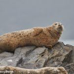 6816 Sea Lion, Katmai National Park, Alaska