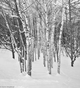 7005 Winter Landscape, Biei, Hokkaido, Japan